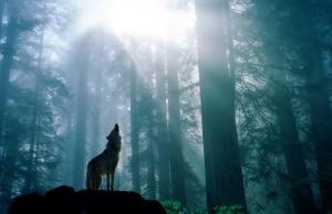 Howling2.34