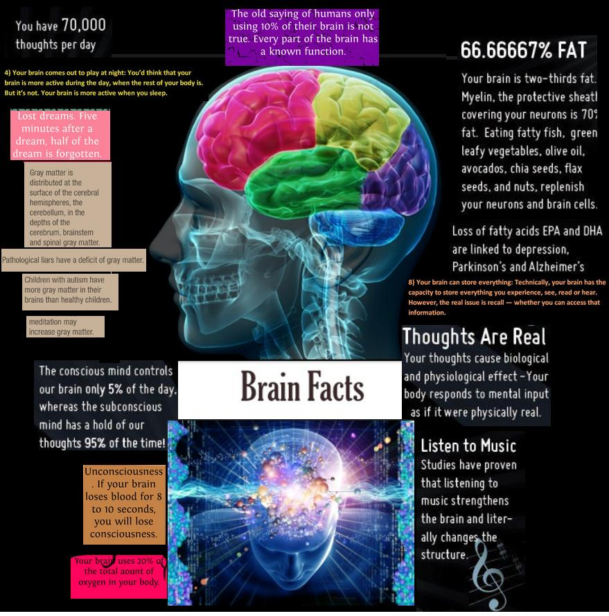 Facts about the brain ks3 2014