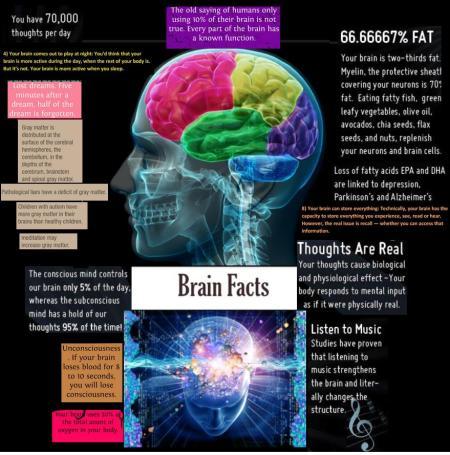 brainfacts